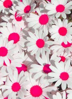 neon daisys