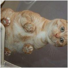 Cats ;-) 7/29