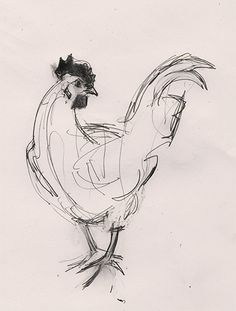 Rooster by Julian Williams Sept 2013 Weird Drawings, Pencil Art Drawings, Art Drawings Sketches, Animal Sketches, Animal Drawings, Scribble Art, Arte Sketchbook, Chicken Art, Animal Paintings