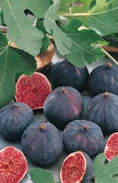 figues violettes - I want one of these trees for my garden.