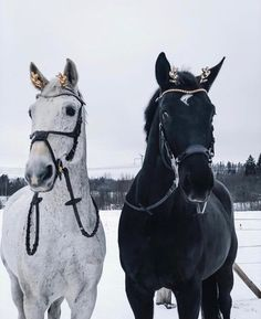 Black or white which one would you ride first? – Black or white which one would you ride first? – – - Art Of Equitation Pretty Horses, Horse Love, Beautiful Horses, Animals Beautiful, Cute Animals, Horse Photos, Horse Pictures, Rare Horse Breeds, Rare Horses