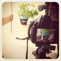 Cosa ci fa una pianta di #basilico a @Mesa-lab? Coming soon