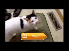 Pets compilation Worlds Funniest Cats And Dogs Video Ever part  this is a funny pet video  on Pet Lovers