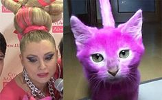 Russian writer paints cat in pink for a party; pet is later found lifeless due to poisoning! | YouSignAnimals.org