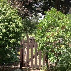 Gate to veg. Garden n compost pile