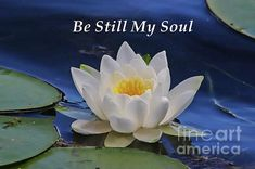 Be Still My Soul inspirational artwork by Marlin and Laura Hum Digital Art Photography, Soul Artists, Inspirational Artwork, Water Lilies, Stretched Canvas Prints, Wood Print, Art Forms, Beautiful Images, Fine Art America