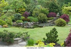 conifers garden design - Google-Suche