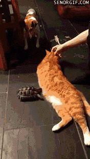 terrorist turtle