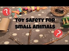 Toy Safety for Small Animals! Chinchillas, Hamsters, Hamster Care, Small Animals, Animal 2, Diy Toys, Cute Pictures, Followers, Safety