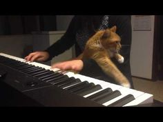 Cat Interrupts Piano Playing - Love Meow