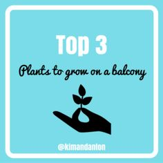Top 3 Plants to grow on a balcony