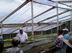 Invernadero para germinación de hortalizas orgánicas. BIO-HUERTO de Humberto Escobar en Bitaco, La Cumbre. Valle del Cauca (CO).