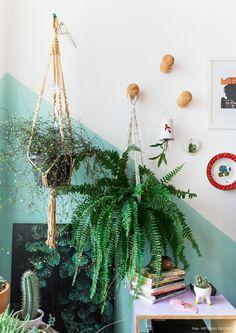 Plantas em hangers de macramê penduradas em ganchos de madeira