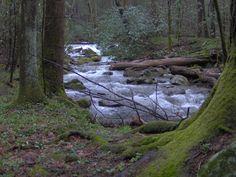 Cosby Creek