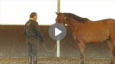 Vorbereitende Übungen für das Verladen Horses, Animals, Vet Office, Training, Horseback Riding, Guys, Badge, Animales, Animaux