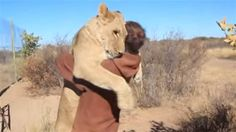 Yikes! In a video that's recently gone viral, a man is shown unlocking a gate, on the other side of which paces a very excited lion. When...