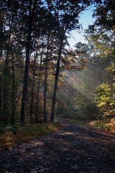 Morning sunbeams on the forest road.