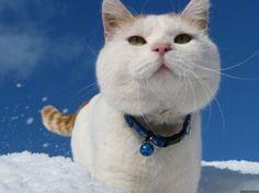 Snow snow, Shiro!