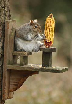 Chillin' squirrel feeder!Nx