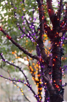 Halloween lights....Twinkle, twinkle, through the night...wake me up full of fright! Recreate this look with orange and purple LED mini lights! http://www.mrcostumes.com/70-5mm-Purple-Orange-LED-Halloween-Lights-Black-Wire-60253.htm