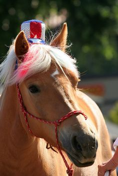 "Horse Guards Parade? by John MOrgan | Flickr ""A horse decked out for the 4th of July. Danville, CA"""