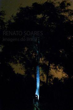 Temas Amazônicos: Entidades da Noite na floresta by www.renatosoares.com.br