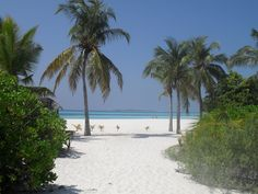 WOW what a beach! Kuredu Island Maldives, what I'd give to be there now!