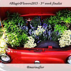 #BlugirlFlowers2013 Instagram Photo Contest finalist @Marinafior Instagram Photo Contest, Fiat 500 Car, Daisy, Creative, Floral, Congratulations, Flowers, Pictures, Romantic
