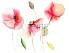 Sch�ne Poppy Blumen, Aquarell photo