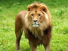 Animal Sanctuaries in Andaman & Nicobar, India @ Sanctuariesindia.com