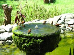 You can see the beautiful birds playing with water in this bird bath.  rcbenviromentalconsulting.com