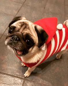 """Bring it on Emma. Slay Bitch, Slay"" - Maisy #slay #StormEmma #DressForTheWeather #WeatherWarning #dresstoimpress #PugOnTheEdge #MaisyMooMoos #PugLife #Pug #pugsofinstagram #Pugstagram #Doggo #Manchester #sassysister #sassy"