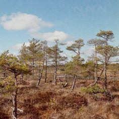 Kemeri swamp #latvia #landscape #swamp #kemeri #nature
