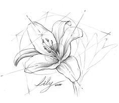 "Instagram의 투시흥신소: ZNLEE LAB님: ""#투시흥신소 yyo****님의 의뢰: 백합(lily) 이 맞나요? #그려줄랩 #perspective #시계도법 #znlee #스케치 #렌더링 #제품디자인 #sketch #투시 #투시공장"" Cartoon Drawings, Drawing Sketches, Art Drawings, Sketching, Flower Drawing Tutorials, Art Tutorials, Orthographic Drawing, Sketch Free, Visual Communication Design"