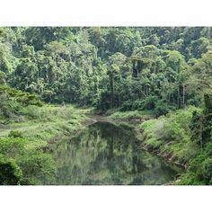 27 de maio, Dia Nacional da Mata Atlântica  #mataatlântica #mataatlantica #mata #floresta #pedrabranca  #riodejaneiro #rj #natureza #jacarepagua #rioeuamoeucuido #rioeuteamo #cachoeira #rio #rios #meioambiente #errejota #destinoerrejota #igersrio #ig_riodejaneiro #jornaloglobo #vejario #boatarde #preserve #ecologia #cidadania #turismo #trilha #trilhas #sustentabilidade #preservação #lídice #lidice #rioclaro