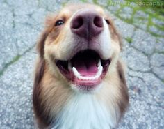 Homemade Dog Toothpaste: 2tbsp baking soda  2tbsp coconut oil 1 drop peppermint oil If you have gingivitis issue add: 10 drops colloidal silver 1 tsp colostrum 1/2 tsp of tumeric root