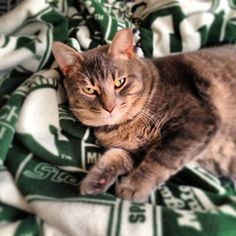 Maybe the best combination ever!   cats + MSU!