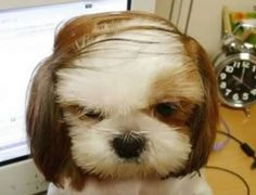 Sorry man, that comb over is not helping...(HAHAHA! This reminds me of my dad!)