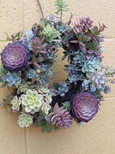 Más tamaños | succulent wreath | Flickr: ¡Intercambio de fotos!