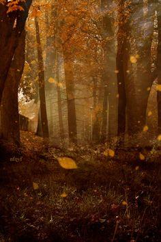 Autumn leaves drifting down