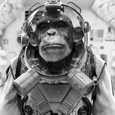Quedaría bien en una portada de disco, no? #monkey #disco #cd #future #nasa…