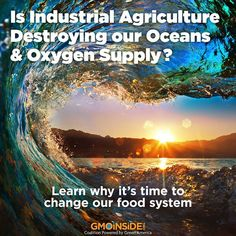 Read the Solution Under our Feet: http://bit.ly/1xLkOgD by John W Roulac Co- chair GMO Inside & CEO Nutiva. Learn how regenerative agriculture can heal our soils and oceans- while providing nutritious foods. More here: http://bit.ly/1xLkOgD #agriculture #food #savetheplanet #organic #saveoursoil