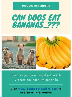 """Bananas are a healthy snack for humans, so it's no surprise if you're eating one in the morning and think to yourself, """"Can I give this to Fluffy?"""" So, can dogs eat bananas? Can Dogs Eat Bananas, Kong Treats, Banana Treats, Dog Eating, Healthy Treats, Dog Food Recipes, Canning, Dog Recipes, Home Canning"""
