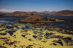 La biodiversidad boliviana y un llamado de atención