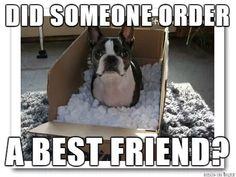 Bestfriend, Anyone? ❤❤❤ from: http://bostonterrierworld.com/bestfriend-anyone/
