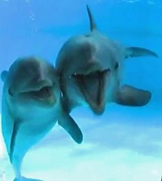 #lovely #dolphin