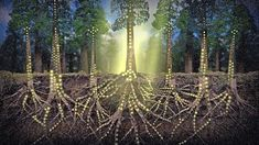 The biological superhighway linking the plant kingdom. Hidden beneath the surface and entangled in the roots of Earth's astonishing and diverse plant life, there exists a biological superhighway linking together the members of the plant kingdom in what. Ideas Actuales, Facts About Plants, Bbc Earth, Plant Fungus, Love Is An Action, Tree Care, Internet, Tree Roots, Fungi