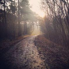 Morning walk at Brunssummerheide