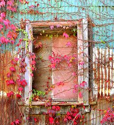 Weathered building, red leaves, vines.