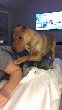 Funny Dog Videos, Funny Animal Memes, Funny Dogs, Cute Little Animals, Cute Funny Animals, Funny Cute, Cute Animal Videos, Cute Animal Pictures, I Love Dogs